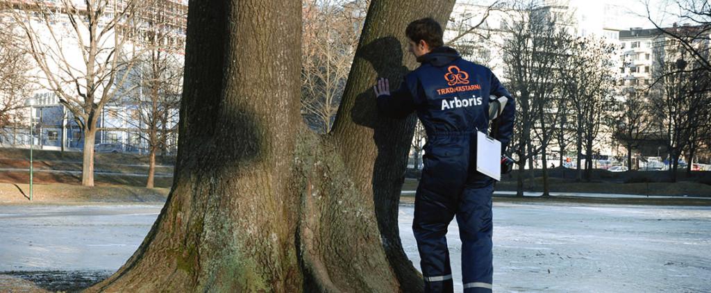 trädvärdering