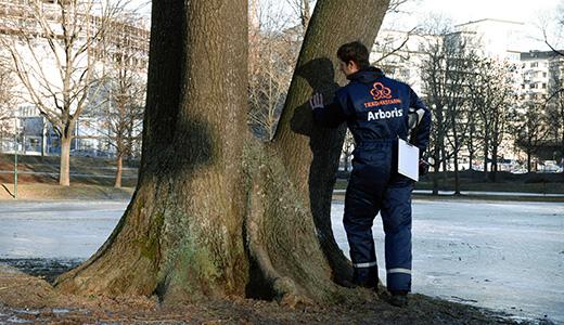 jörg besiktigar bilder hemsidan feb 2009 143